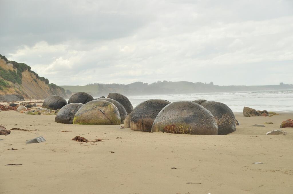 Dijkstra's in Nieuw Zeeland